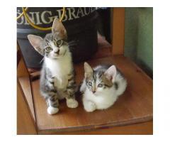 Gyönyörű kiscica testvérpár
